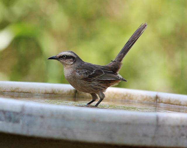 pták v pítku